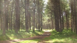 Tentsmuir_Forest